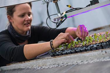 Biolumic's UV plant technology extends beyond crop growth