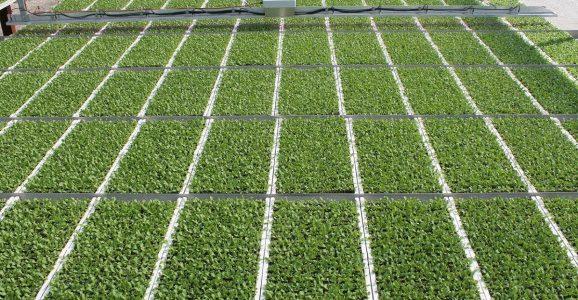 BioLumic raises $5 million to harness ultraviolet light to improve crop yields